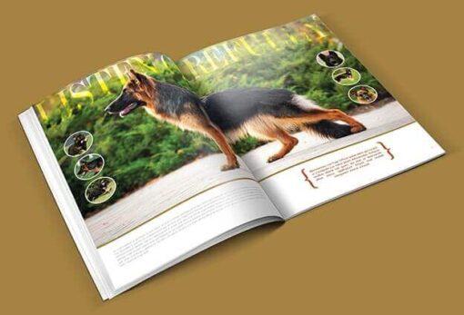 in-catalogue-catalog-profile-7